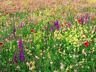 Såning og pleje af blomstergræs