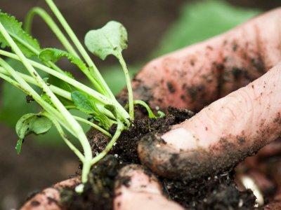 Grøntsagsjord