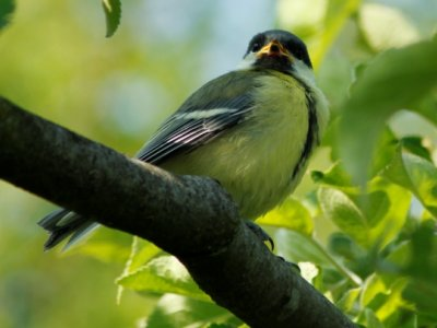 Fugleliv i haven