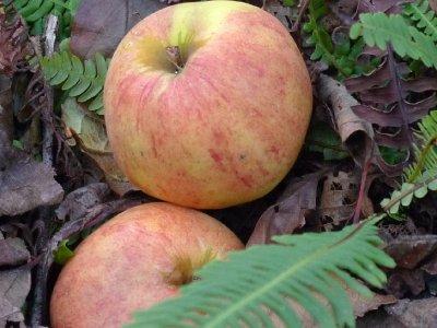 Æbler med orm