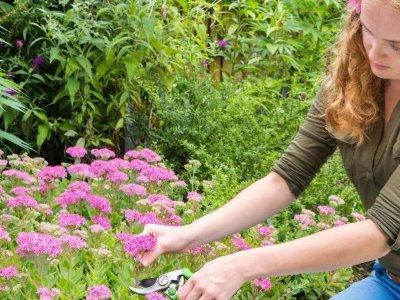Få dit eget blomsterhav